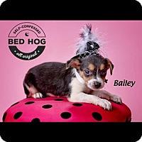 Adopt A Pet :: Bailey - Charleston, WV