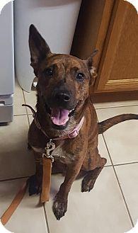 Plott Hound/German Shepherd Dog Mix Dog for adoption in Akron, Ohio - Libby