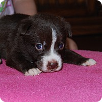 Adopt A Pet :: Henry - North Myrtle Beach, SC