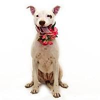 Adopt A Pet :: Benyet - St. Cloud, FL