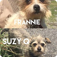 Terrier (Unknown Type, Small) Mix Dog for adoption in Troutville, Virginia - Frannie & Suzy Q