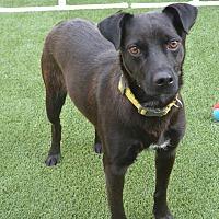 Adopt A Pet :: Gidget - Meridian, ID