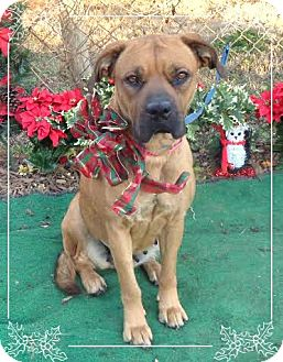 Boxer Mix Dog for adoption in Marietta, Georgia - ABBY- see video