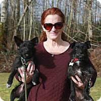 Adopt A Pet :: Olive - Surrey, BC