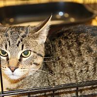 Adopt A Pet :: Alvin - Rochester, MN