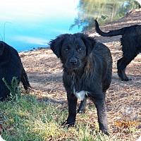 Adopt A Pet :: Jessica - Boston, MA