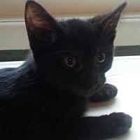 Adopt A Pet :: Fenway - Columbus, OH