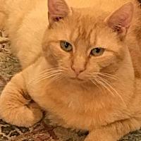 Adopt A Pet :: Athena - Philadelphia, PA