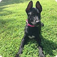 Adopt A Pet :: Lydia - Nashua, NH