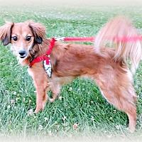 Adopt A Pet :: Sammye - Tijeras, NM