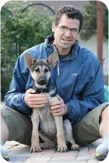 German Shepherd Dog Puppy for adoption in Los Angeles, California - Noah von Christensen