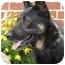 Photo 2 - German Shepherd Dog Mix Dog for adoption in Los Angeles, California - Cassie von Murray