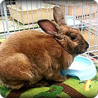 Adopt A Pet :: Toffee - Williston, FL