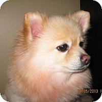 Adopt A Pet :: Allie - Welland, ON