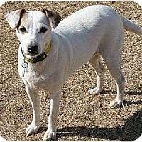 Adopt A Pet :: Maddie in OK - Oklahoma City, OK