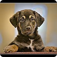 Adopt A Pet :: Ariel - Wickenburg, AZ