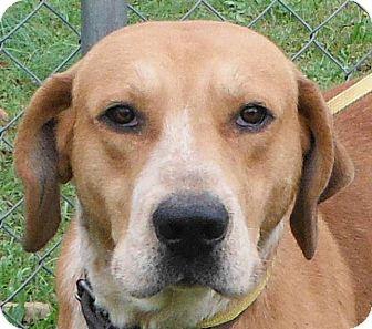 Retriever (Unknown Type)/Pointer Mix Dog for adoption in Cedartown, Georgia - 29975860