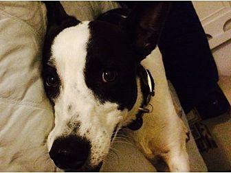 Border Collie Mix Dog for adoption in Tempe, Arizona - Jai