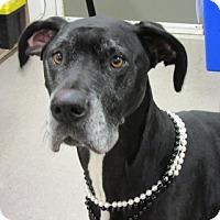 Adopt A Pet :: Bella - Martinsburg, WV