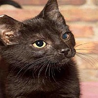 Adopt A Pet :: HAYLEY - Alameda, CA