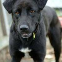 Adopt A Pet :: DeeDee - Garland, TX