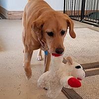 Adopt A Pet :: Jade - Annapolis, MD