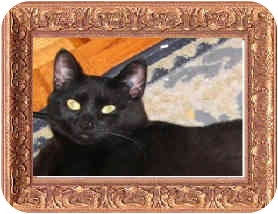 Domestic Shorthair Cat for adoption in Spruce Grove, Alberta - Gracie