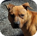 Terrier (Unknown Type, Medium) Mix Dog for adoption in Tinton Falls, New Jersey - Harvey
