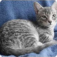 Adopt A Pet :: ET - Montreal, QC