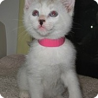 Adopt A Pet :: Anita - Shelton, WA