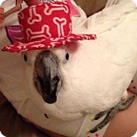 Adopt A Pet :: Scully - Lenexa, KS