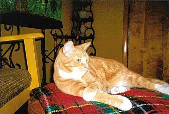 Domestic Shorthair Cat for adoption in Cincinnati, Ohio - zz 'Russell' courtesy listing
