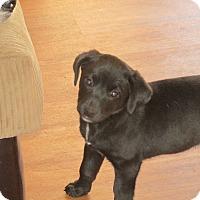 Adopt A Pet :: Raven - Franklin, VA
