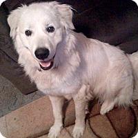 Adopt A Pet :: Leah - Morgantown, WV