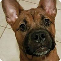 Adopt A Pet :: TRINITY - Pompton Lakes, NJ
