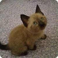 Adopt A Pet :: Cole - Ocala, FL