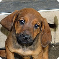 Adopt A Pet :: Silver - in Maine - kennebunkport, ME