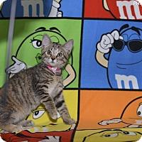 Adopt A Pet :: Ginger Spice - Medina, OH