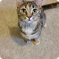 Adopt A Pet :: Nibbles - Fredericksburg, VA