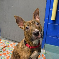 Adopt A Pet :: NINA - Philadelphia, PA