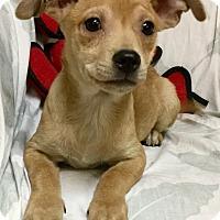 Adopt A Pet :: Jelly - Phoenix, AZ