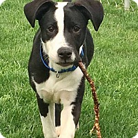 Adopt A Pet :: Carly - Morgantown, WV