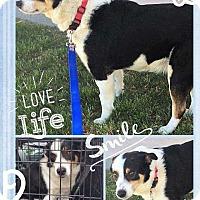 Adopt A Pet :: Wendell - Sidney, NE