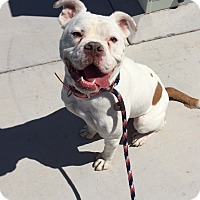 Adopt A Pet :: Meeko - Las Vegas, NV