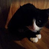 Adopt A Pet :: Fern - Monterey, VA