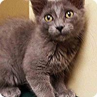 Adopt A Pet :: Tommy - Channahon, IL