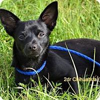Adopt A Pet :: Cole - Palm City, FL