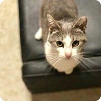 Adopt A Pet :: 17-042 Jenny - York County, PA