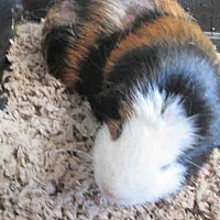 Adopt A Pet :: *Urgent* Edgar - Fullerton, CA