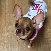 Adopt A Pet :: Daisy - Poland, IN